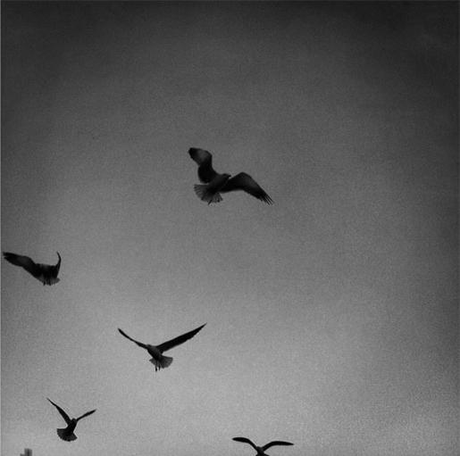 birds_2